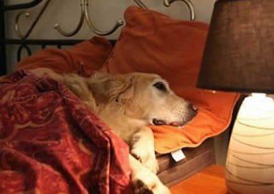dog_sleeping