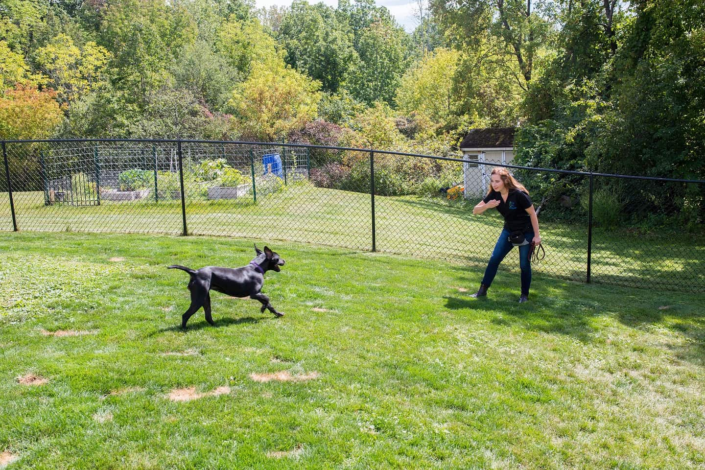 Dog Training in Rochester, NY